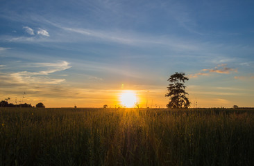 sunset with tree in the field