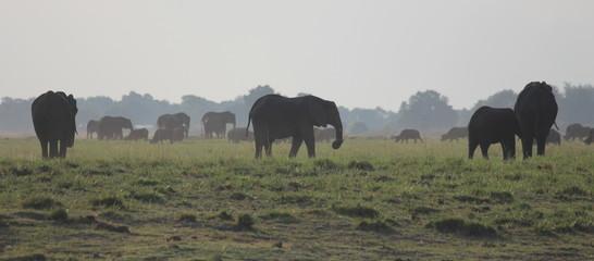 Elephants on the African Savannah