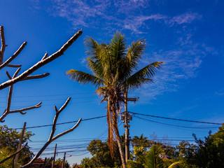 Coqueiro e céu azul