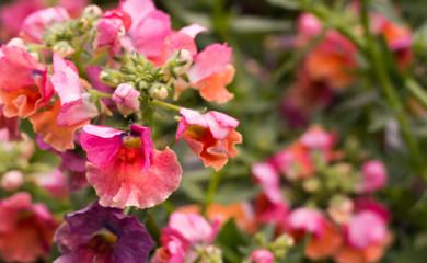 Pink Flower Macro Background
