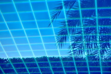 Swimming pool with blue tiles forming a grid pattern and an image of a tropical palm tree reflected in the calm water