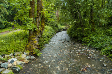 small creek inside park with trees on both sides