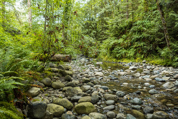 rocky creek with shallow water surrounded by forest