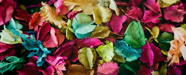 dry flower background, color background