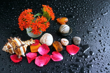 Red rose petals on a dark background with water drops and sea stones.
