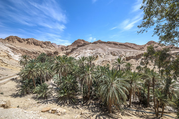The oasis of Shebik is one of the ten most beautiful oases in the world.