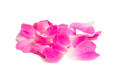 pink petals isolated