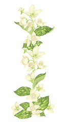 Vertical decor elements with jasmine flowers bloom branches in realistic graphic vector illustration