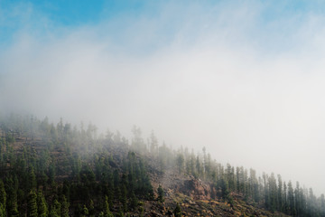 Mountain with woods in the cloud