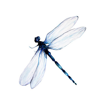 water color painting dragon fly