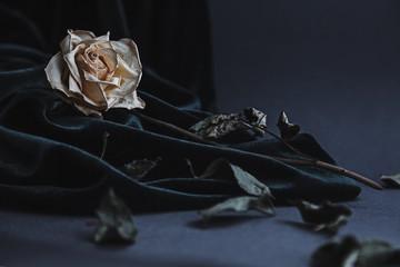 Dried white rose on gray background with dark velvet draping