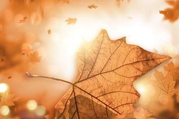 autumn bokeh lights