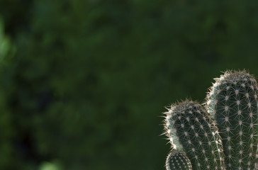 How To Crochet A Cactus Tutorial - YouTube | 240x364