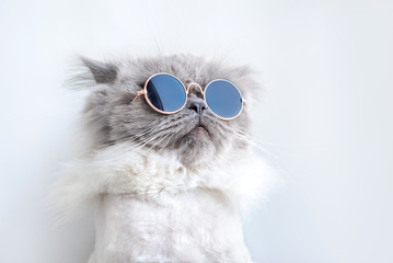 funny cat portrait in sunglasses Wall mural