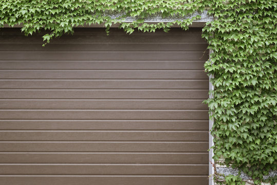 automatic garage doors covered with a film for a tree with thickets of grapes along the perimeter
