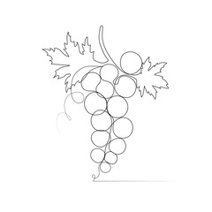 Fototapeta One line drawing grape sketch isolated on white background.