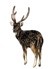spotted deer stands full-length with his back turned with his head turned turns back, sketch vector graphic color illustration on white background