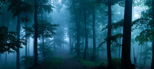 Photo sur Aluminium Route dans la forêt Panorama of foggy forest. Fairy tale spooky looking woods in a misty day. Cold foggy morning in horror forest