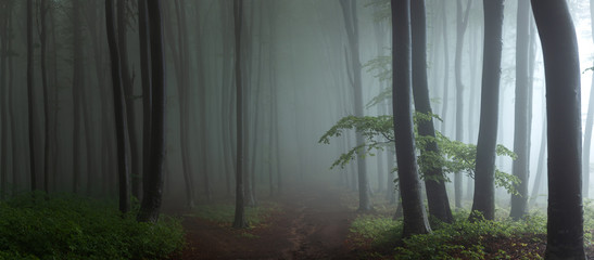 Deurstickers Bossen Panorama of foggy forest. Fairy tale spooky looking woods in a misty day. Cold foggy morning in horror forest