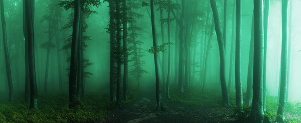 Wall Murals Forest Panorama of foggy forest. Fairy tale spooky looking woods in a misty day. Cold foggy morning in horror forest
