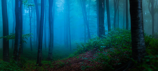 Panorama of foggy forest. Fairy tale spooky looking woods in a misty day. Cold foggy morning in horror forest