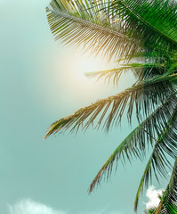 Vintage toned palm tree,summer tree ,retro,coconut tree with copy space