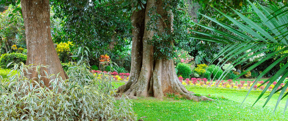 Tropical park with beautiful trees and flowers. Wide photo.