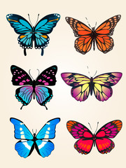 Flying bright blue butterfly morpho and orange monarch butterfly