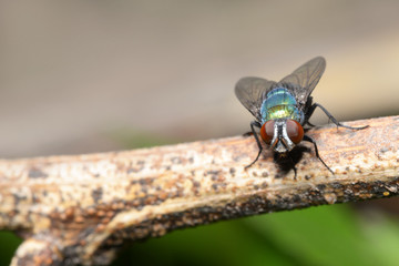 Macro insect fly on tree branch