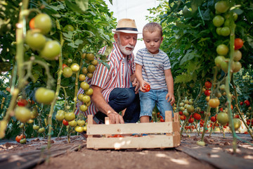 Grandfather and his grandson in a greenhouse
