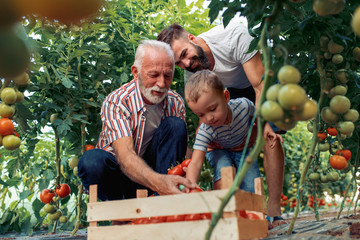 Grandfather,son and grandson working in greenhouse