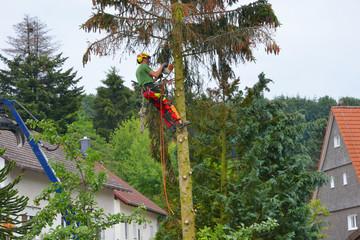 Baumfäller bei der Arbeit an einer Tanne mit Motorsäge und Absturz-Sicherung