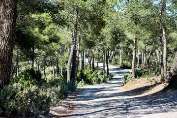 Poster de jardin Olive Path through the forest in the mountains of Ibiza. Spain