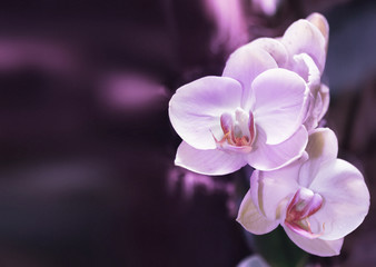 Beautiful orchid branch on abstract blurred background