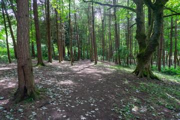 Scottish Tree Lined Forrest Floor.