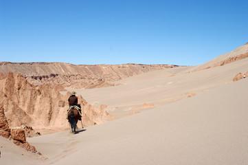 Cavalier dans le désert d'Atacama