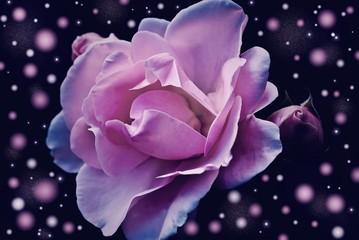 feautiful fantasy rose
