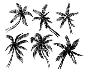 Set of palm trees sketches. Hand drawn vector