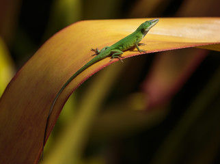 Green Lizard sitting on an orange plant, soft blurred background