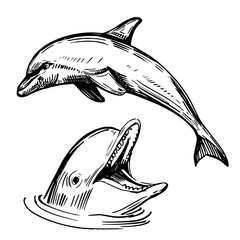 Sketch of dolphin. Hand drawn illustration converted to vector