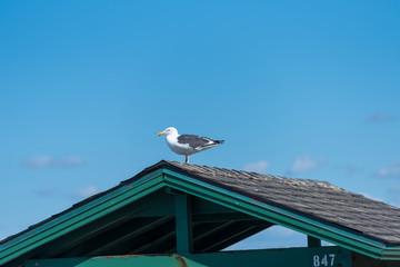 屋根の上に止まるカモメ
