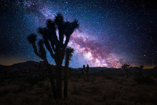 Joshua tree park under a starry night, in Mojave Desert, California