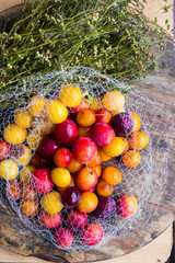 Colorful cherry plums. Yellow, red berries known as myrobalan plum. Raw vegan vegetarian sweet dessert for breakfast or lunch. Organic harvest product from permaculture farm