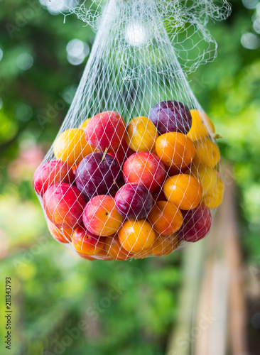 Colorful Cherry Plums Yellow Red Berries Known As Myrobalan Plum
