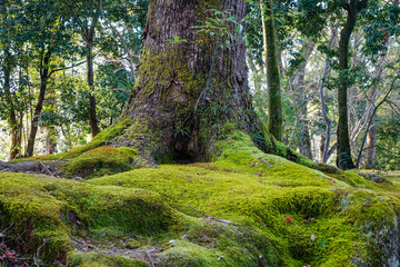 Ancient tree with green moss at the city park