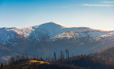 snowy top of Velykyi Verkh. beautiful morning scenery of late autumn in Carpathian mountains, Ukraine
