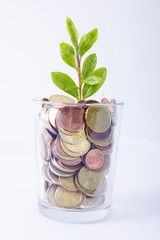 full glass of euro coins and green twig. concept of economy and savings