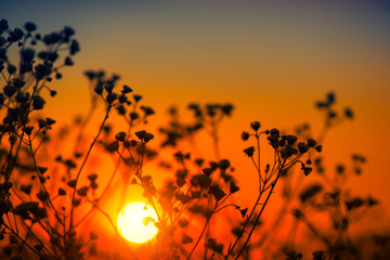 Fotoväggar - Beautiful meadow with wild flowers over sunset sky. Field of camomile medical flower, Beauty nature background with sun flare.