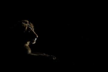Dark Night Lion