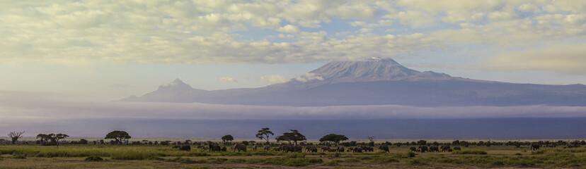 Elephant Panorama